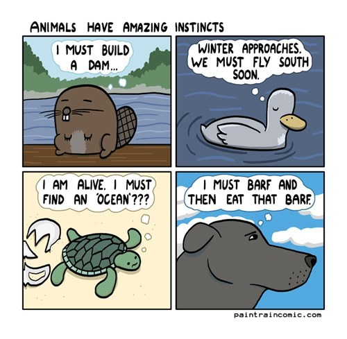 barf,beavers,birds,comics,dogs,ducks,instincts,sea turtles,turtles