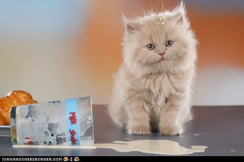 Cyoot Kitteh of teh Day: Look at Me, Not Crying Over Spilt Milk!