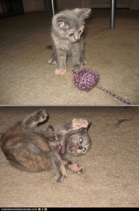 attack,Cats,cyoot kitteh of teh day,kitten,multipanel,spaz,strings,yarn