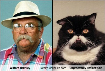 Wilford Brimley Totally Looks Like Ungracefully Retired Cat