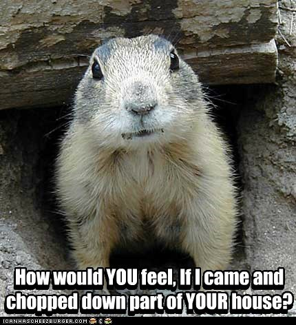 angry,chopped,house,prarie dog,Tables Turned,tree
