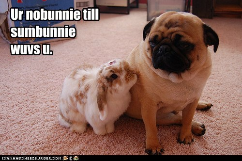 best of the week,bunny,captions,dogs,Hall of Fame,Interspecies Love,love,pug,rabbit