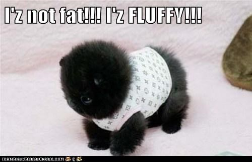 I'z not fat!!! I'z FLUFFY!!!