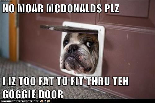 NO MOAR MCDONALDS PLZ  I IZ TOO FAT TO FIT THRU TEH GOGGIE DOOR