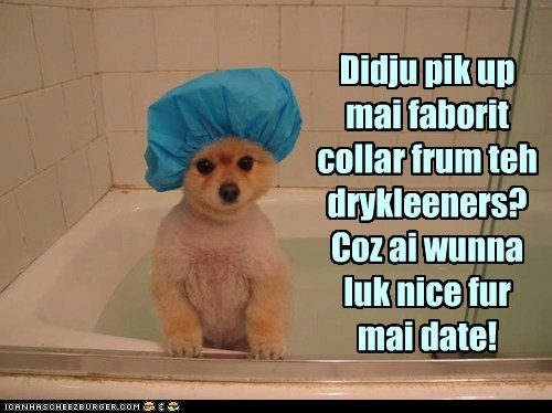 bath,captions,dogs,dogs dressed up,dry cleaning,pomeranian,shower cap