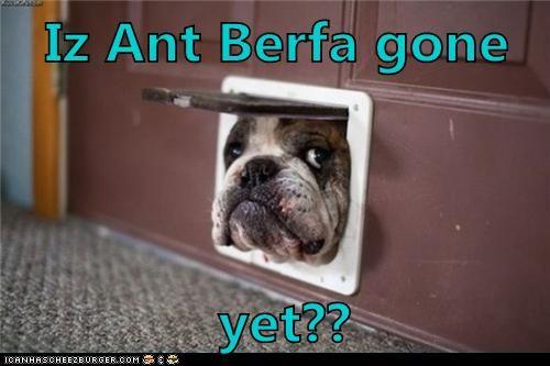 aunt,dogs,doggie door,english bulldog,hiding