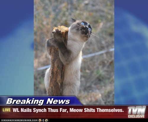 Breaking News - WL Nails Synch Thus Far, Meow Shits Themselves.