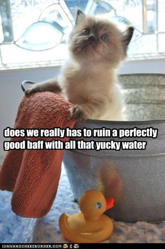 Lolcats: does we really has to ruin a perfectly good baff