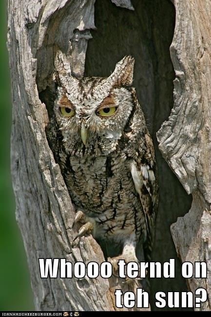 bright,cranky,hoot,Owl,sleepy,sun,turn on,who