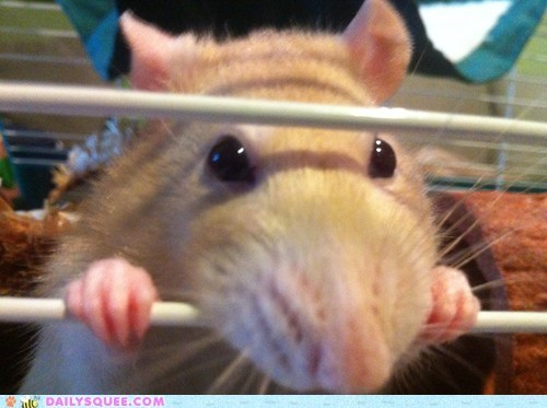 Reader Squee: I Shall Nom You, Cage!
