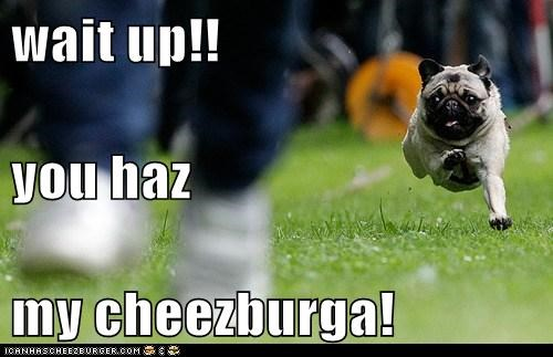 wait up!! you haz my cheezburga!