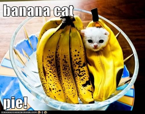 banana cat  pie!