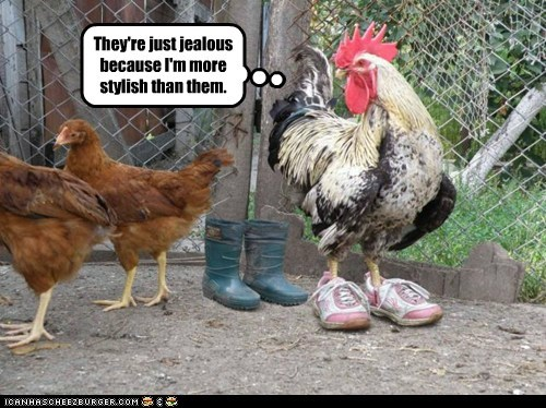 bitter,chicken,hens,jealous,rooster,shoes,sneakers,snub,style