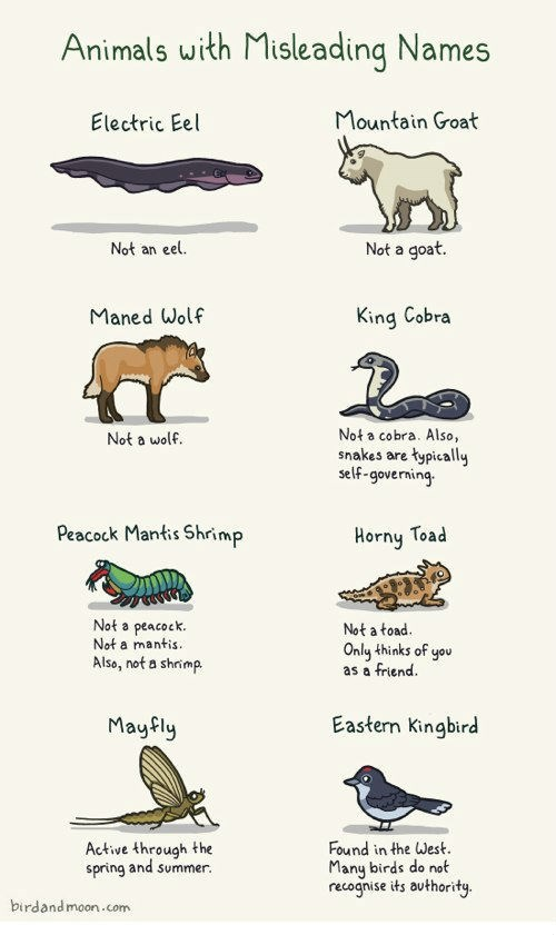 Chart of Animals With Misleading Names