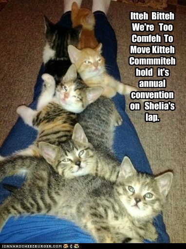 Itteh  Bitteh   We're   Too Comfeh  To  Move Kitteh  Commmiteh  hold   it's   annual convention   on   Shelia's   lap.