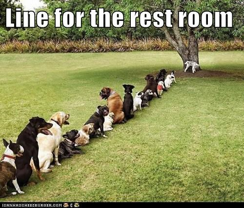 Line for the rest room