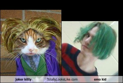 joker kitty Totally Looks Like emo kid