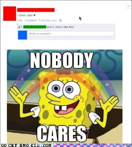 Cats,crazy cat lady,facebook,nobody cares,SpongBob InnuendoPants,weird kid