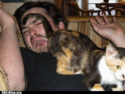 Jackass Cat FAIL