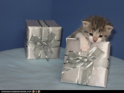 boxes,Cats,cyoot kitteh of teh day,gifs,kitten,presents,surprise