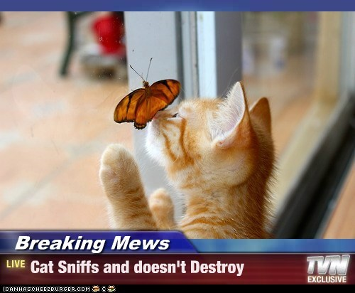 Breaking Mews - Cat Sniffs and doesn't Destroy
