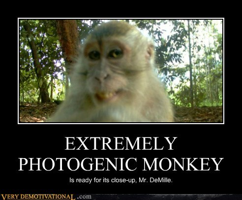 EXTREMELY PHOTOGENIC MONKEY