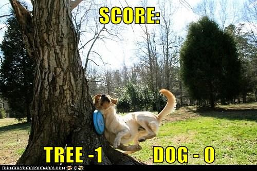 I Has A Hotdog: Goggie vs. Tree