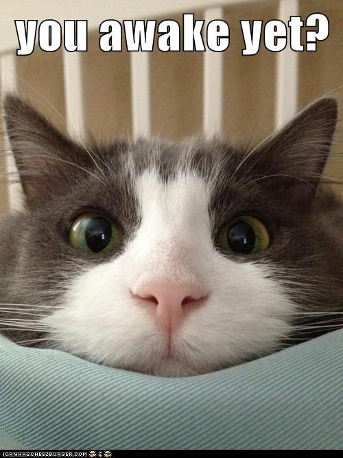 you awake yet?