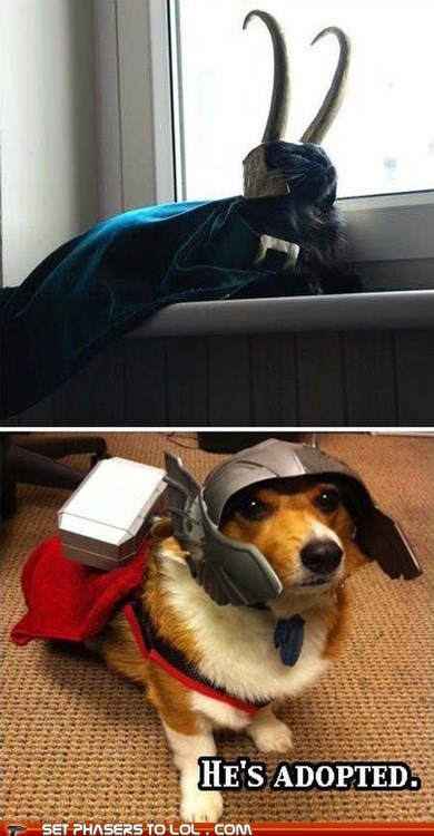 adopted,animals,best of the week,cat,Cats,corgi,corgis,costume,dogs,loki,mjolnir,multipanel,The Avengers,Thor