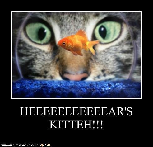 HEEEEEEEEEEEAR'S KITTEH!!!