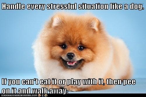 advice,dogs,eat,pee,play,pomeranian