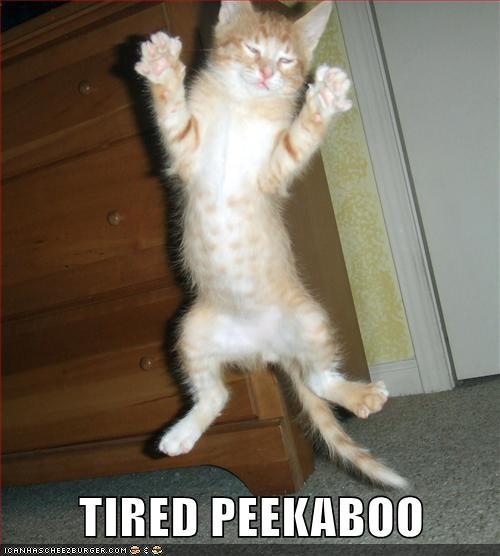 captions,Cats,derp,jump,peekaboo,sleepy,tired