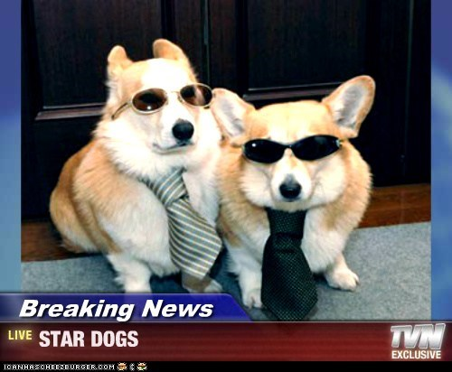 Breaking News - STAR DOGS