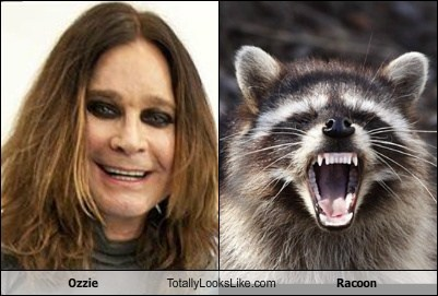 Ozzie Totally Looks Like Racoon