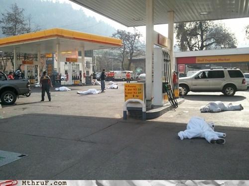 arctic drilling,gas,gas station,polar bears,shell