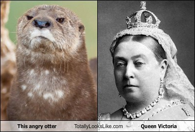This angry otter Totally Looks Like Queen Victoria