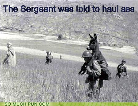 ass,donkey,double meaning,haul,haul ass,literalism,order,sergeant,told