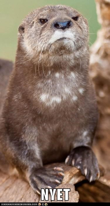 Disapproving Russian Otter