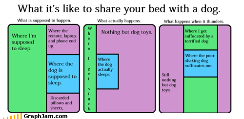 bed,dogs,pets,sleeping,what actually happened