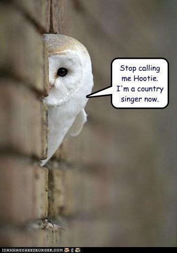 blowfish,country singer,hiding,hootie,Owl,stop