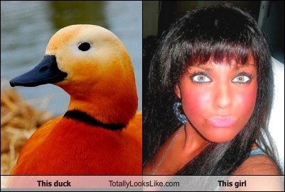 This Duck Totally Looks Like This Girl