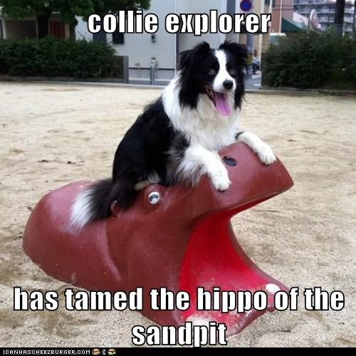 adventurer,collie,dogs,explorer,hippo,sand pit