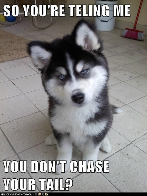 chase,Skeptical Newbor,Skeptical Newborn Puppy,tail