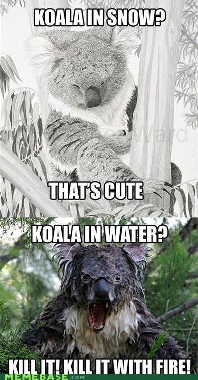 Memebase: This Goes Out Koala My Haters Out There