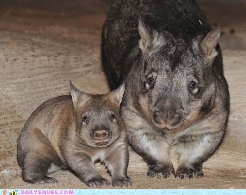 Squee Spree: Mommy and Baby Wombat