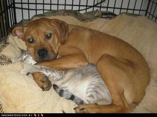 cat,dogs,hugs,kittehs r owr friends,spooning