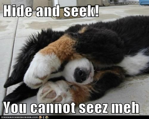 Hide and seek!  You cannot seez meh