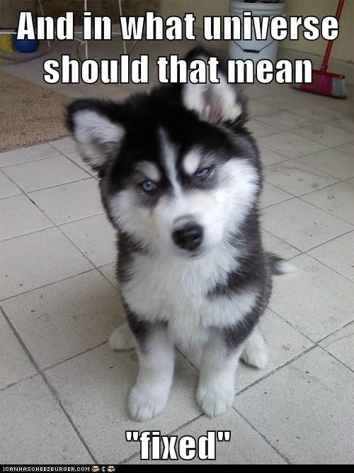 Animal Memes: Skeptical Newborn Puppy - Sounds More Like You're Breaking Something