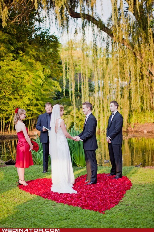 funny wedding photos,petals,rose petals,roses