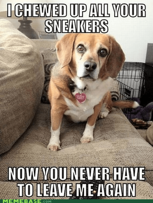Memebase: Overly Attached Dog